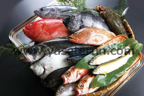 のどぐろや金目鯛などの人気魚類