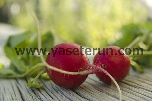 葉っぱ付きの新鮮な赤カブ