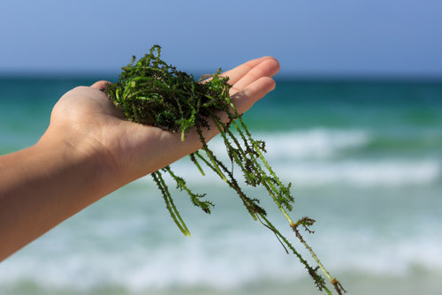 海藻類はハゲない食事への近道になる